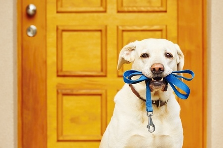 Dog Walking Services in Lakeland FL