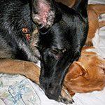 Pet Sitting Services in Lakeland, FL