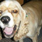 Dog Boarding, Walking, Pet Sitting, In-Home Pet Sitting in Lakeland, FL